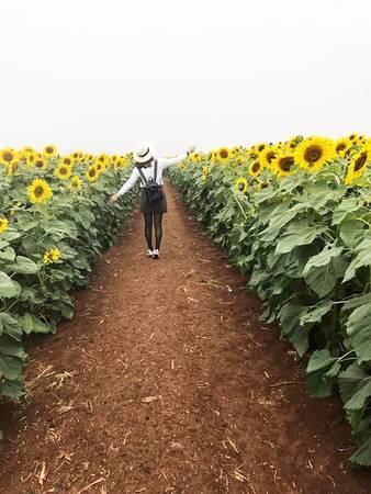 Giữa mảnh đất miền Trung khô cằn xuất hiện cánh đồng hoa rực rỡ bên dòng sông Sào thơ mộng, tạo nên bức tranh thiên nhiên hoàn mỹ. Ngoài ra, bên cạnh cánh đồng hoa hướng dương năm nay ban tổ chức có trồng thêm cánh đồng hoa bươm bướm tuyệt đẹp. Ảnh: Trương Diệu Thơm.
