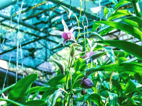 Trong Homestay còn nuôi cả các loại chim làm cảnh và những chậu lan nở hoa rất đẹp.