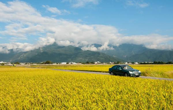 con-duong-lua-song-ao-dep-nhu-tranh-o-dai-loan-ivivu-13