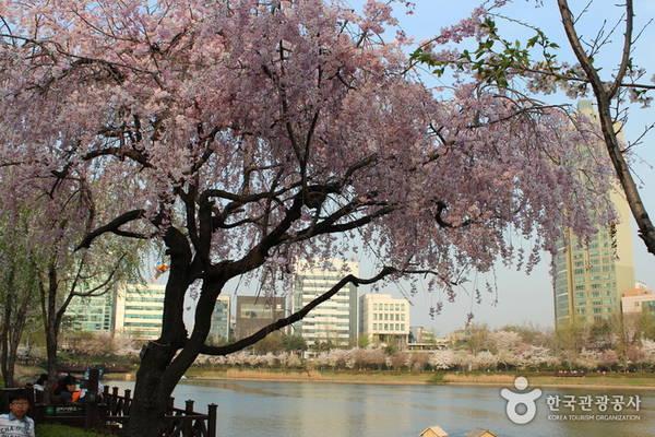 Ảnh: visitkorea