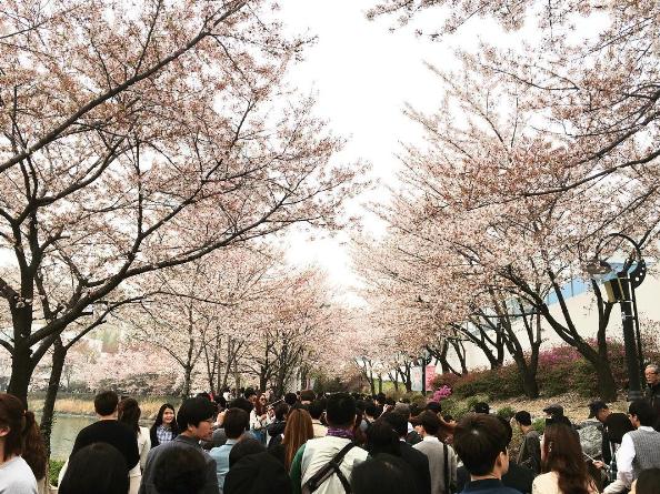Ảnh: life.inkorea