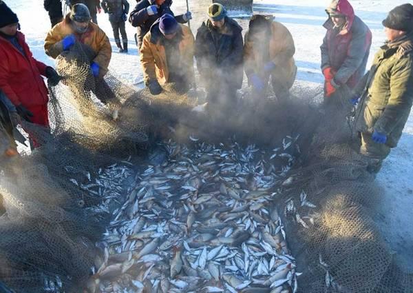 Một mẻ lưới tại đây có thể kéo lên rất nhiều cá và các sinh vật biển khác (Ảnh: Xinhua)