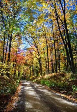 """Khu rừng """"lửa"""" Một phần Allegheny nằm trọn bên trong bang Pennsylvania rộng gần 200.000 ha rừng. Suốt mùa thu, cây rừng chuyển lá sang màu đỏ, vàng cam rực rỡ như những ngọn lửa đang cháy, nhưng không được nhiều người nhìn thấy như ở New England - nơi mùa lá vàng, đỏ rất dễ thấy bên các nông trại hay ven các con đường."""
