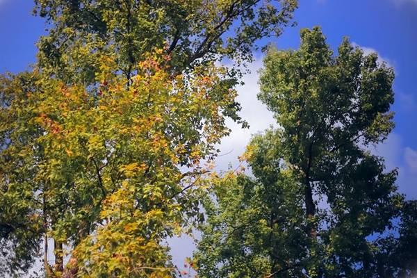 Đầu đông, rừng phong thay lá tạo nên cảnh thơ mộng và yên bình. Khung cảnh thiên nhiên ở đây thích hợp cho nhiều người muốn đi leo núi, dã ngoại hay tìm một nơi thanh tịnh nơi chốn cửa phật. Ảnh: Chuồn chuồn Kym.