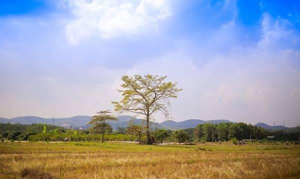 Không gian khoáng đạt, yên bình nhìn từ chùa Thanh Mai. Ảnh: Chuồn chuồn Kym.