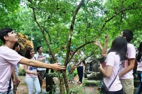 """Du khách lạ lùng với cây ổi """"biết cười"""" ở Thanh Hóa (Ảnh: Báo Thanh niên)"""