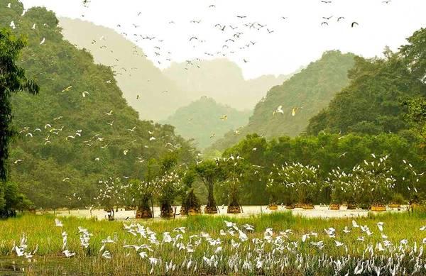 Nằm ở phía tây nam thành phố Ninh Bình, khu du lịch sinh thái - vườn chim Thung Nham thuộc xã Ninh Hải, huyện Hoa Lư. Thung Nham được bao quanh bởi các dải rừng nhiệt đới trên dãy núi đá vôi, với nhiều thung lũng và hang động. Đặc biệt đến với Thung Chim, du khách còn được khám phá cuộc sống của gần 40 loài chim với khoảng 50.000 con. Ảnh: Vuonchimthungnham.