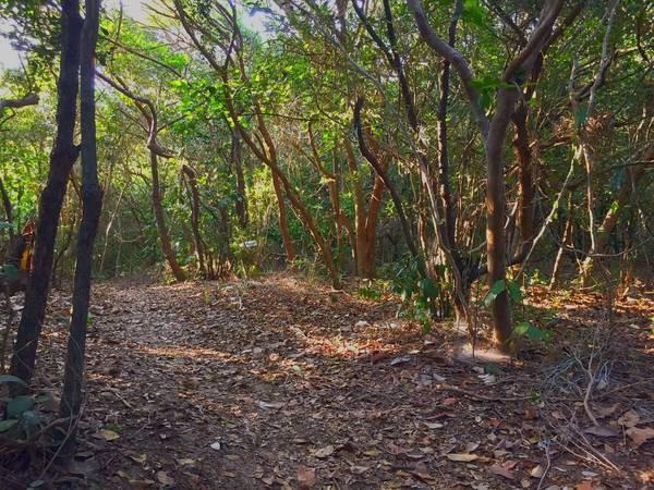 Sau khi nghỉ ngơi ở nhà chú 2 thì đã đến lúc bắt đầu trekking qua những khu rừng và đồi cát bằng những con đường mòn.