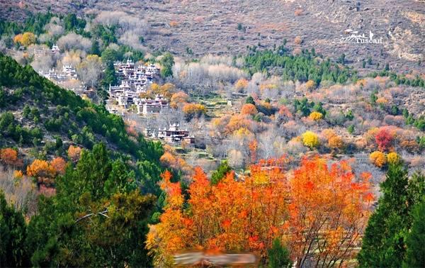 Lá vàng, lá đỏ xen lẫn màu trắng xám của cành cây khô khẳng khiu tạo nên một bức tranh phong cảnh đầy cuốn hút.