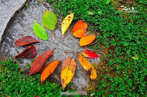 Đây là địa điểm tuyệt vời dành cho ai muốn ngắm mùa thu vàng còn sót lại.