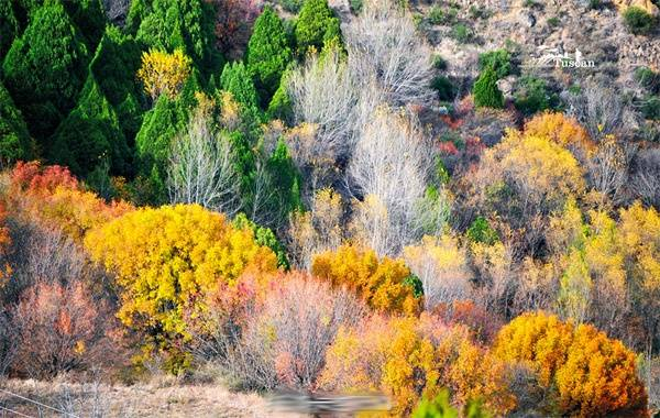 Ban ngày, ánh nắng mặt trời xua đi tiết trời giá buốt, chiếu rọi rực rỡ từng cành cây kẽ lá.