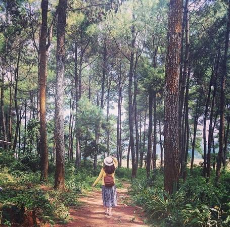 Người ta ví nơi đây như Đà Lạt thu nhỏ của Tây Bắc, với rừng thông xanh cao vút, thẳng đứng mạnh mẽ trải dài bạt ngàn trên dãy đồi đất feralit đỏ nâu tạo nên cảnh quan tự nhiên đẹp mê hồn. Ảnh: Primrosept.