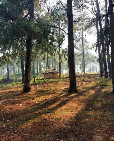 Rừng thông bản Áng có khí hậu ôn hòa, không khí trong lành là tạo cảm giác thư thái, thoải mái khiến khu rừng đã đẹp lại càng trở nên đáng yêu, hấp dẫn hơn. Những nếp nhà sàn nằm thấp thoáng, ẩn hiện tạo nên khung cảnh lung linh, huyền ảo. Ảnh: Dpdpanda.