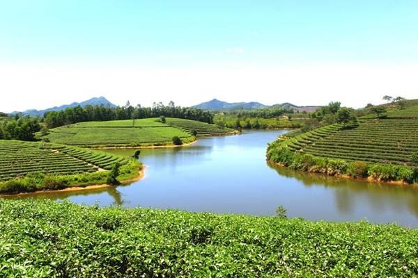Đường đến đảo chè nằm trên dọc đường Hồ Chí Minh. Qua xã Thanh An, Thanh Chương, bạn di chuyển khoảng 200 m sẽ đến đảo chè. Ảnh: Trần Bá Chung.