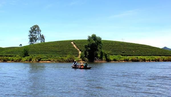 Phương tiện để tham quan các đảo chè là thuyền hoặc xuồng máy. Một chuyến thuyền chở tối đa bốn người khách với đầy đủ phao cứu hộ có mức giá từ 100.000-150.000 đồng trong một buổi. Ảnh: Trần Bá Chung.
