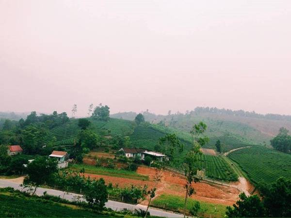 Đồi chè đẹp nhất lúc sáng sớm khi trời còn sương. Bạn có thể bắt đầu một ngày mới nhiều năng lượng với hương thơm của lá chè và khí hậu mát mẻ. Chè được trồng nhiều ở trên ốc đảo và các sườn đồi núi trên cao. Ảnh: Đặng Khánh Huyền.