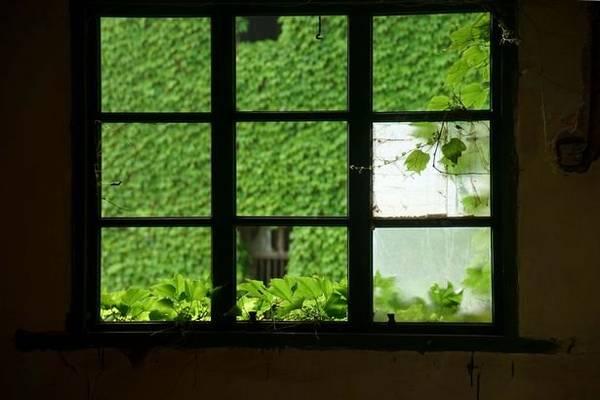 Khung cảnh thơ mộng nhìn từ cửa sổ một ngôi nhà - Ảnh: Exclusivepix Media