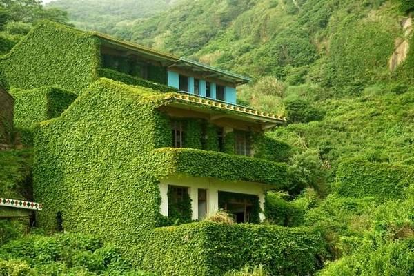 Một ngôi nhà bị dây leo phủ kín hoàn toàn - Ảnh: Exclusivepix Media