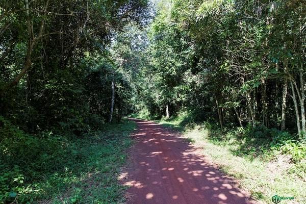 Đầu giờ chiều, chúng tôi chính thức bước vào chuyến trải nghiệm của mình, với thử thách đầu tiên là trekking xuyên rừng với độ dài 7 km. Quãng đường không quá dài, lại đi trong cái râm mát của rừng nhiệt đới nên chúng tôi rất phấn khởi và háo hức.