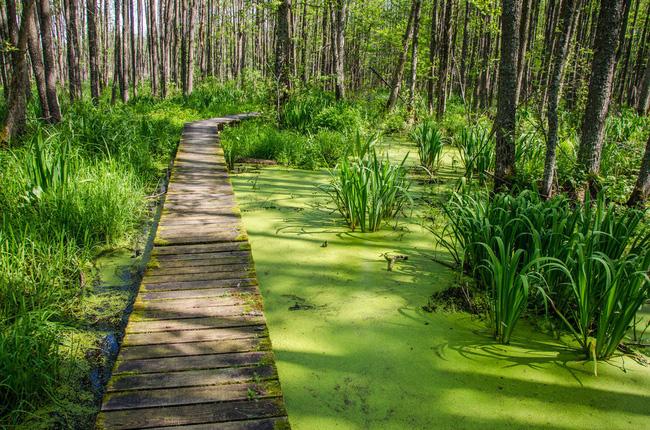 Công viên quốc gia Kemeri mang nhiều đặc điểm của một vùng đất ngập nước, bao gồm khu đầm lầy Great Kemeri Bog, nơi nổi tiếng với lối đi bằng gỗ dài xuyên qua khu rừng ngập.