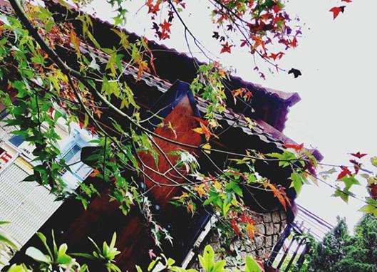 Đà Lạt mùa lá phong. Ảnh: Nhungtran2410.