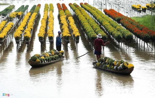 Sa Đéc (Đồng Tháp): Làng hoa ở xã Tân Quy Đông, thành phố Sa Đéc, Đồng Tháp là vựa hoa lớn nhất khu vực Nam Bộ, cung cấp hoa cho khắp các tỉnh trên cả nước.
