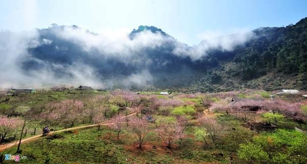 Nói đến Mộc Châu cũng phải nhắc tới hoa đào rừng. Đào nơi đây thường nở muộn vào tháng 2 (trước hoặc sau Tết Nguyên Đán). Sẽ thật uổng phí nếu khách không đến vùng du lịch nổi tiếng nhất của tỉnh Sơn La này để ngắm cảnh vào đầu xuân.