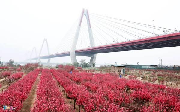 Làng Nhật Tân, Phú Thượng (Hà Nội): Đây là nơi trồng nhiều hoa đào nhất thủ đô. Người dân trong làng sống chủ yếu bằng nghề trồng đào cảnh. Kỹ thuật trồng đào ở đây là ghép cành đào bích vào gốc đào quả để tạo ra cây đào lai gốc khoẻ, mà hoa vẫn đẹp, bông đều.