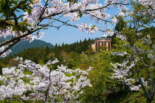 Mùa xuân ở công viên Alishan.