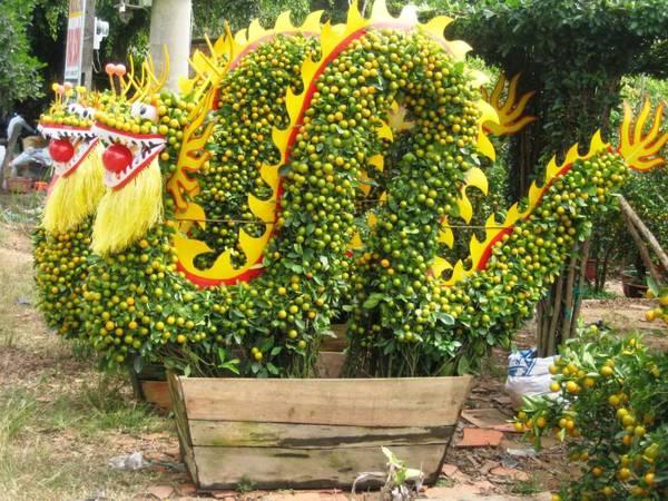 Tắc kiểng tạo dáng rồng rất bắt mắt, cuốn hút người xem. Ảnh: dulichdongque.com