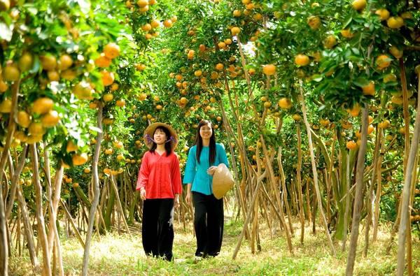 Bạn sẽ được dạo quanh trong vườn trái cây Cái Mơn và được dùng trái cây tại chỗ.  Ảnh: vietnamtourism.com