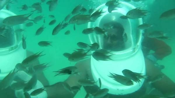 Bạn có thể cho cá ăn dưới sự hướng dẫn của hướng dẫn viên và có thể chụp hình lưu niệm thời khắc thú vị ấy. Ảnh: youtube