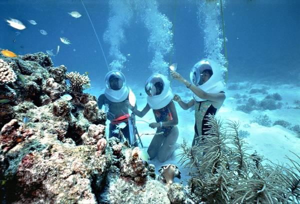 Bạn như được sống ngay trong chính môi trường nước, hòa chung với các loài sinh vật biển. Ảnh: pattayacentral.com