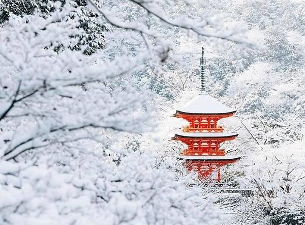 Màu đỏ nổi bật trên nền tuyết trắng tinh khôi