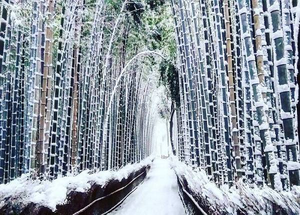 Tuyết đọng trên lối đi vào rừng tre Sagano