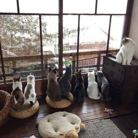 Những chú mèo lười biếng tò mò ngắm nhìn cảnh vật bên ngoài từ khung cửa sổ