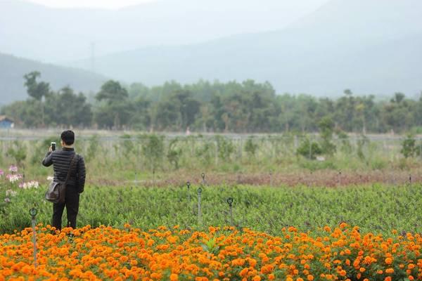 Những luống hoa được trồng thẳng hàng thẳng lối tạo điều kiện cho du khách dễ dàng ghi lại những bức ảnh long lanh.