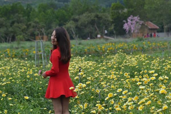 Hiện tại, thiên đường hoa Quảng La đang sở hữu khoảng 30 loài hoa đặc trưng, mang giá trị thẩm mỹ cao như hướng dương, cải trắng, cải vàng, ngũ sắc, túy điệp, ngũ sắc... đã và đang thu hút được sự quan tâm không hề nhỏ với các bạn trẻ thích chụp ảnh.
