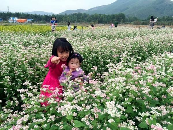 Nếu như chưa có dịp đến với Hà Giang ngắm hoa tam giác mạch hay về Nghệ An ngắm hoa hướng dương thì du khách có thể đến Quảng Ninh để ngắm cả hoa hướng dương và hoa tam giác mạch trên cánh đồng rộng lớn.