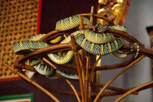 Theo Odd, rắn trong đền là những loài cực độc như hổ mang, lục... Những con rắn độc thường khá dạn dĩ với khách đến viếng. Chúng thường bò qua lại nhưng không cắn người.