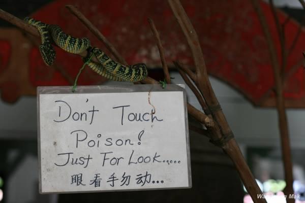 Trong đền có những tấm biển ghi chú nhằm cảnh báo du khách không được động, chạm vào rắn độc mà chỉ nên chiêm ngưỡng. Tuy vậy, cũng có không ít vị khách bạo gan đã chạm tay vào những con vật này. Bạn cũng có thể chụp ảnh với một con rắn quấn quanh cổ, giá một lần chụp là 30 RM (150.000 đồng), theo Penang-vacations.
