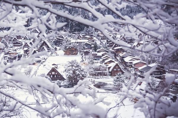 Ngôi nhà ở đây có lối kiến trúc độc đáo Gassho-zukuri với phần mái nhà làm hoàn toàn bằng cỏ đã phơi khô, lợp thành từng lớp dày có độ dốc cao để không bị đọng và chịu được sức nặng của tuyết.
