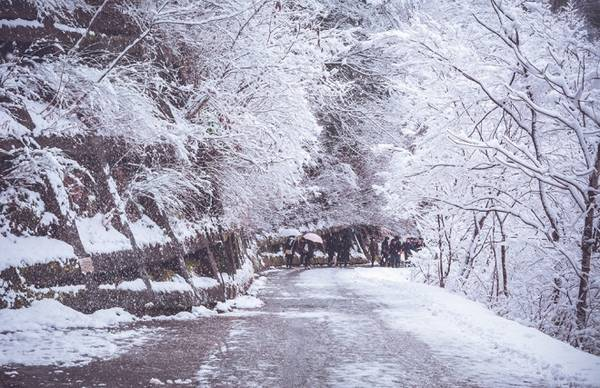 Con đường nhựa, hàng cây ven đường phủ một màu trắng.