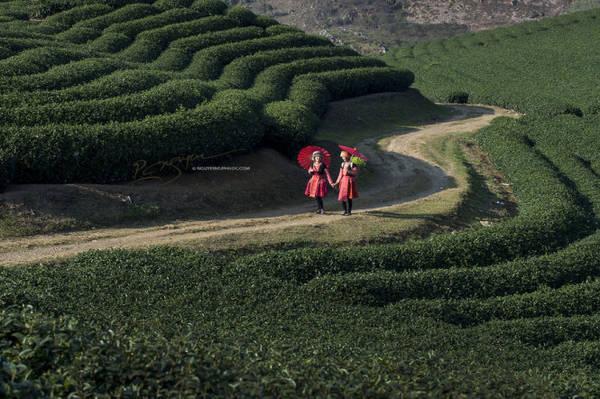 Những đồi chè xanh ngát ở Mộc Châu - Ảnh: Nguyễn Vũ Phước