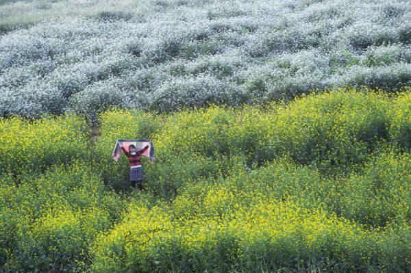 Du khách chụp ảnh trong vườn hoa cải và hoa tam giác mạch - Ảnh: Nguyễn Vũ Phước