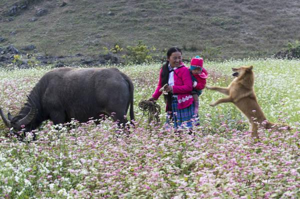 Hoa cỏ cũng bừng sắc xuân - Ảnh: Nguyễn Vũ Phước