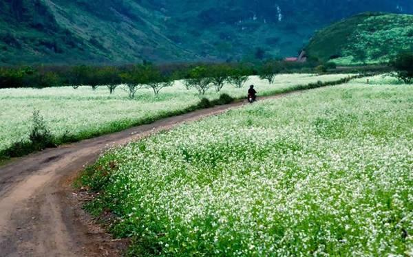 Mộc Châu là điểm đến hot ở miền Bắc dịp mùa xuân.