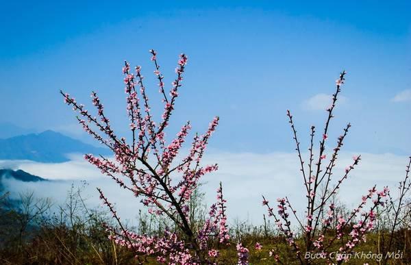 Khi xuân về, Y Tý không chỉ bồng bềnh với biển mây trắng như bông, mà nở rộ sắc thắm của hoa đào. Cảnh sắc thơ mộng cùng với tình người ấm áp của những người dân tộc nơi đây là điều thú vị mà không phải ai cũng có thể cưỡng lại. Ảnh: Nguyễn Ngọc Minh.
