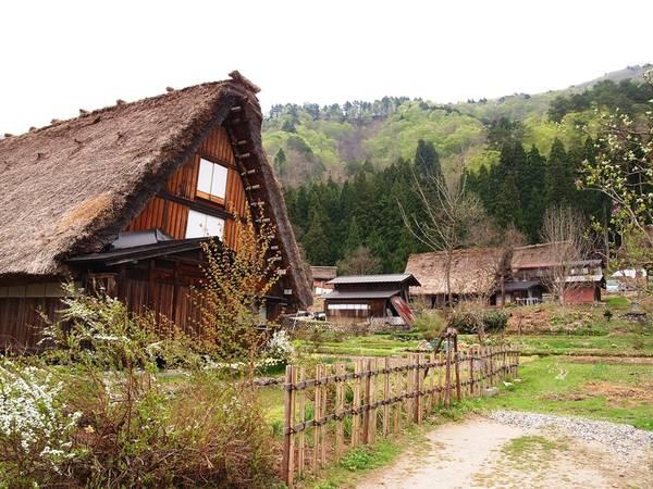 Phần mái nhà được lợp bằng cỏ tranh hoặc rơm. Mỗi bên mái dày 50 cm để chống đỡ tuyết và cái lạnh trong mùa đông. Chúng ghép vào nhau giống như động tác chắp tay khi cầu khấn. Ảnh: Worldpress.
