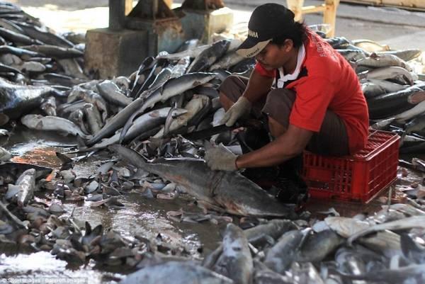Người đàn ông đang cắt vây cá trong phiên chợ ở Indramayu, tỉnh West Java, Indonesia.